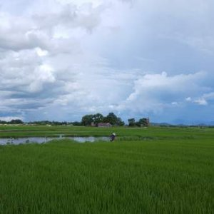 Hue rice fields, Hue Countryside